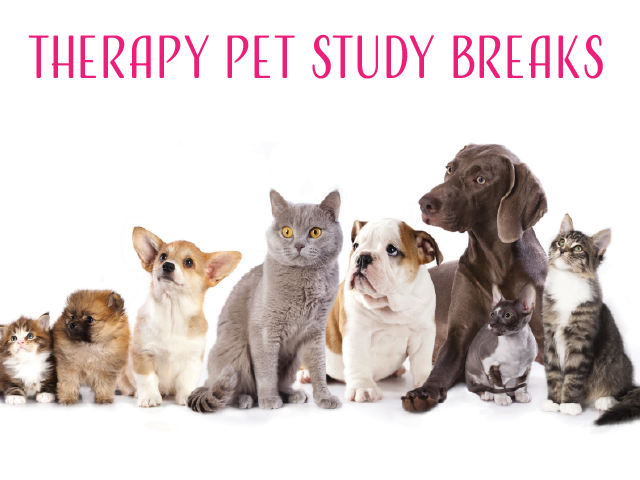 Therapy Pets